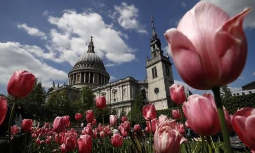 Tulipani piantati nei giardini intorno alla Cattedrale di St. Paul a Londra
