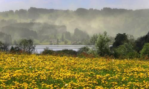 Nube di polline mosso dal vento sul lago Niedersonthofener See a Missen, vicino a Immenstadt, nella regione di Allgaeu, nel sud della Germania