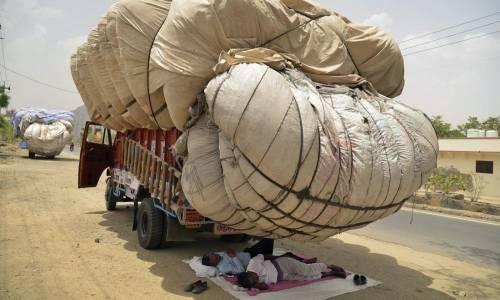 Il riposo all'ombra offerta dallo strabordante carico di fieno in Rajahstan, India.