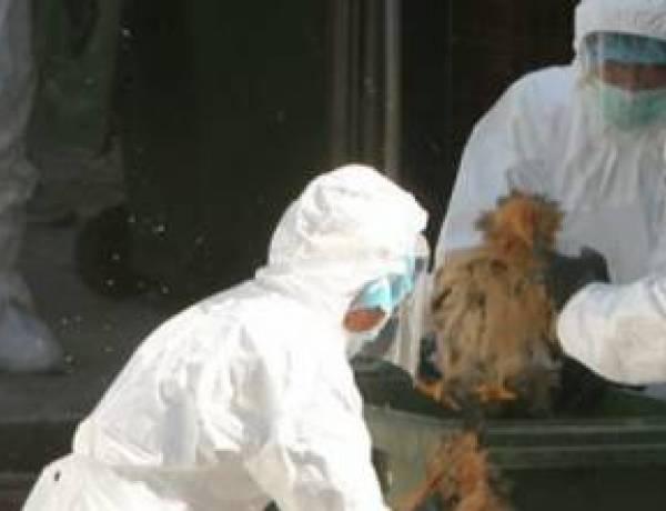 È allarme pandemia: dalla Cina l'influenza che può uccidere ovunque