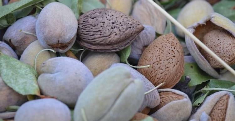 Frutta secca in gravidanza: ecco tutti i benefici