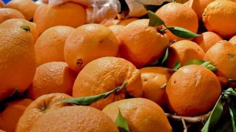 Falso bio, sequestrate in tutta Italia 15 tonnellate di alimenti